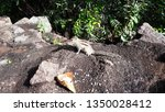 scared squirrel waiting for the ... | Shutterstock . vector #1350028412