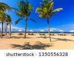 sunbeds and palm trees on the... | Shutterstock . vector #1350556328