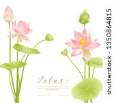 lotus flowers.  template for... | Shutterstock .eps vector #1350864815