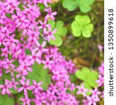 Floral Pink Background. Petals...