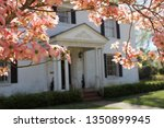 pink dogwood with southen...   Shutterstock . vector #1350899945