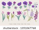 spring flowers. set. anemones... | Shutterstock .eps vector #1351067768