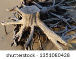 Tree Roots On The Beach