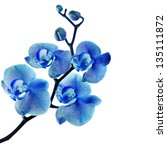 blue orchid isolated on white... | Shutterstock . vector #135111872