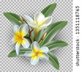isolated 3d realistic vector...   Shutterstock .eps vector #1351118765