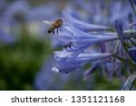 A Bee Is Flying To A Blue...