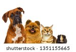 Stock photo set of pets watch 1351155665
