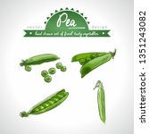 pea collection of fresh... | Shutterstock .eps vector #1351243082