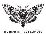 hand drawn butterfly acherontia ... | Shutterstock .eps vector #1351284068