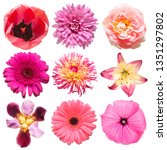 Collection Pink Flowers Head O...