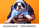 Boston Terrier In Cute Hoodie...