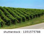 conegliano valdobbiadene region ...   Shutterstock . vector #1351575788