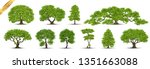 collection  realistic  trees... | Shutterstock .eps vector #1351663088