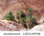 green palm trees in an oasis in ... | Shutterstock . vector #1352149958