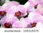 blooming orchids in the garden | Shutterstock . vector #135215375