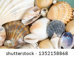 a seashell or sea shell   also... | Shutterstock . vector #1352158868