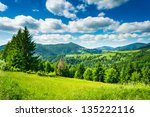 green meadow with fir trees in the mountainous area - stock photo