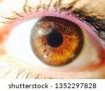 beautiful brown eye   Shutterstock . vector #1352297828