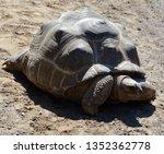 Stock photo the aldabra giant tortoise aldabrachelys gigantea from the islands of the aldabra atoll in the 1352362778