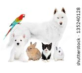 Stock photo dogs cat bird rabbits in front of a white 135240128