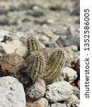 desert cactus wild | Shutterstock . vector #1352586005