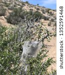 caterpillar web nest | Shutterstock . vector #1352591468