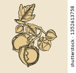 vector hand drawn plant in... | Shutterstock .eps vector #1352613758