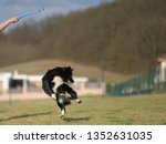 border collie dog. stroll.... | Shutterstock . vector #1352631035