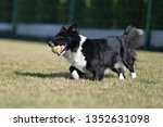 border collie dog. stroll.... | Shutterstock . vector #1352631098