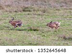 Stock photo hares running in a field 1352645648