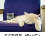 Stock photo cats kittens sleeping indoor 135266948