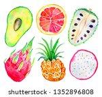exotic fruits. avocado ... | Shutterstock . vector #1352896808