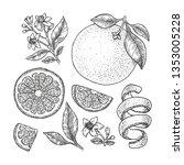 orange botanical illustration.... | Shutterstock .eps vector #1353005228