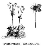 a picture is showing a plant... | Shutterstock .eps vector #1353200648