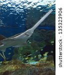 Sawfish In An Aquarium