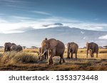Herd Of Large African Elephant...