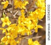 Yellow Flowers. Beautiful...