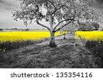 Shining Yellow Oilseed Rape...