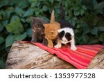 Stock photo young girl holding three beautiful kittens outdoor adoption concept homeless kittens the problem 1353977528