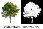 single tree on transparent...   Shutterstock . vector #1353987722