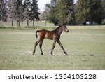 few weeks old colt live on a...   Shutterstock . vector #1354103228