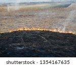 dry vegetation on fire ... | Shutterstock . vector #1354167635