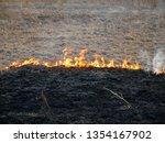 dry vegetation on fire ... | Shutterstock . vector #1354167902