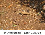lizard on ground the lizard... | Shutterstock . vector #1354265795