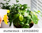 flowers in white pots on the... | Shutterstock . vector #1354268342