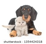 Stock photo cute dachshund puppy embracing tiny gray kitten isolated on white background 1354424318