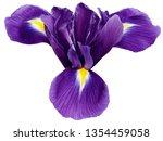 Bright Purple Iris Flower ...