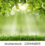 natural green background with... | Shutterstock . vector #135446855