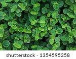 peppermint leaves nature pepper ... | Shutterstock . vector #1354595258
