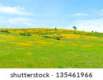 View of a beautiful valley with spring wildflowers. - stock photo